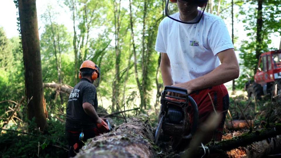 Isère, le bois local pour tous